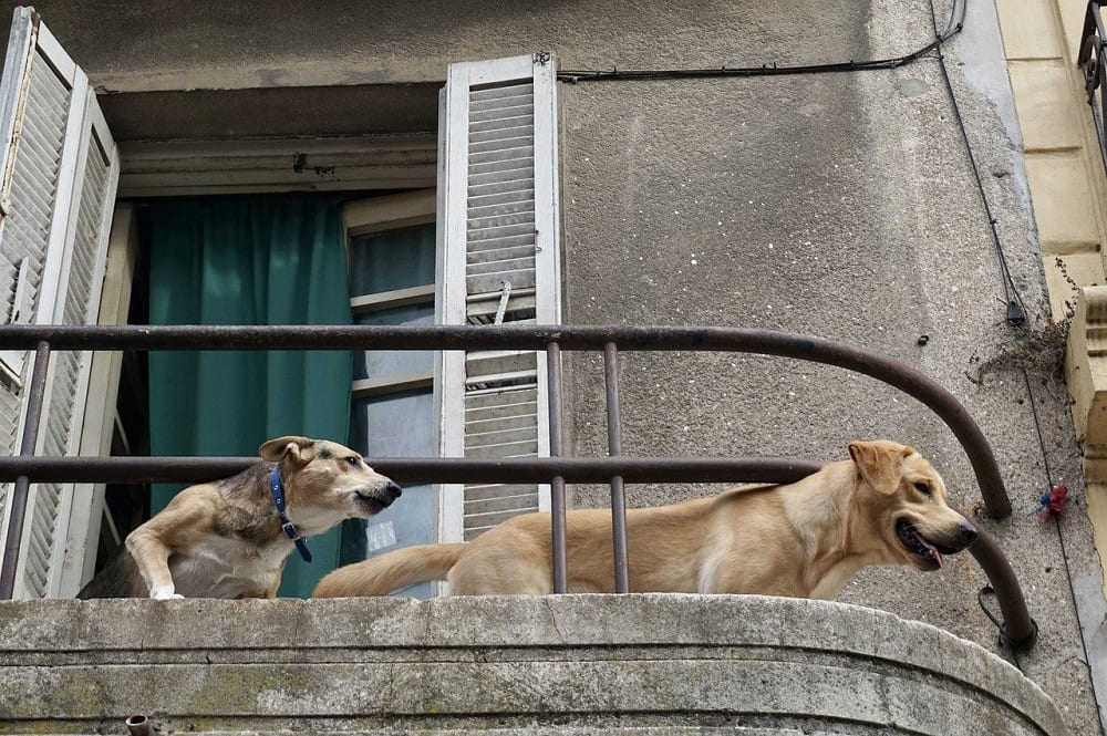 Cómo actuar ante los ladridos del perro del vecino